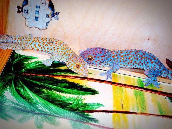 Пара гекконов на выставке порадовала.. видела впервые геккон Animal Geckos PicturePerfect Exotic Animals Animal Exhibit 2017 Eyeem Awards Kirov