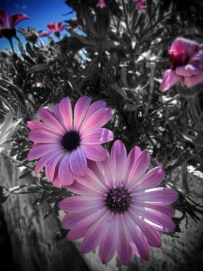 Natureeamzoofamily] Nature Flower Somosfelices