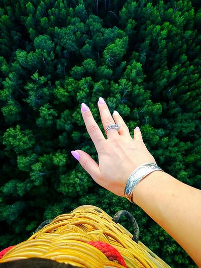 Close-up of human hand above trees