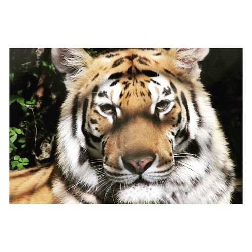 Tiger Animals In The Wild KINGDOM