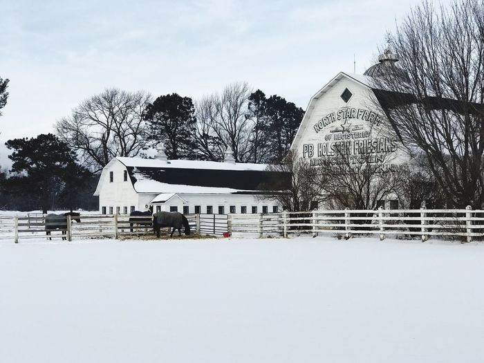 Winter Cold Temperature Snow Tree Architecture Built Structure Building Exterior Weather Nature Outdoors Day Sky Bare Tree Field No People Beauty In Nature Barn Minnesotaphotographer