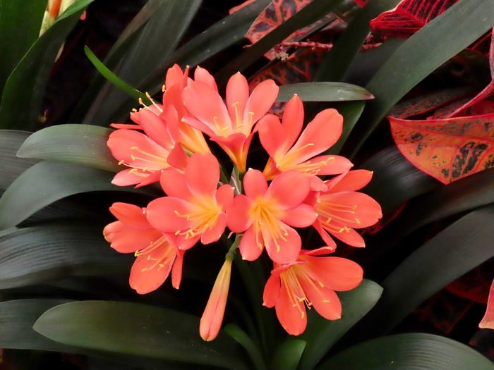 Flowering plants orange petals green leaves flower growth beauty in nature High Angle View No People