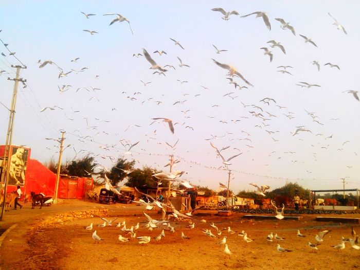 MORNING BIRDS ON SEA