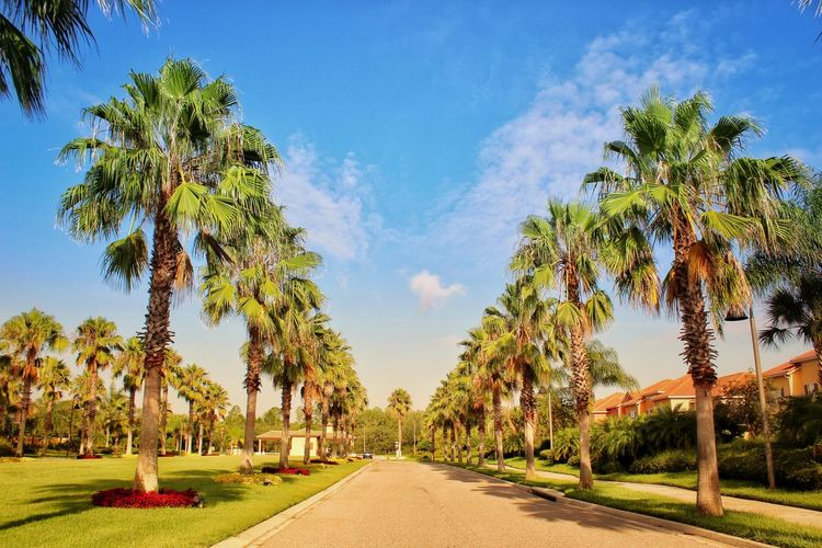Panoramic view of palm trees against sky