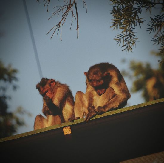 Animals In The Wild Monkey Family Sunbathing☀ Timepass Nothing To Fear Or Die For