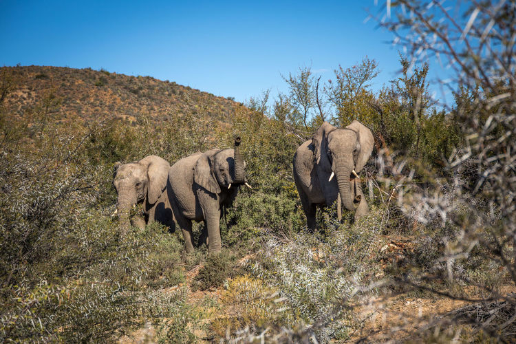 Elephants in forest against sky