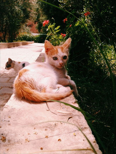 Animal Relaxe Animal Themes Animals Animals In The Wild Beauty In Nature Bleu Eyes Cat EyeEmNewHere Relaxing