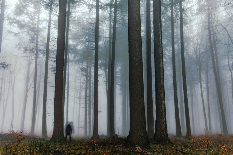 Ghost sighting during misty evening. Beauty In Nature Day Evening Fog Foggy Day Foggy Landscape Foggy Weather Forest Forest Photography Forest Trees Forests Ghost Growth Landscape Nature No People Outdoors Sadness Scenics Tranquility Tree Tree Trunk WoodLand