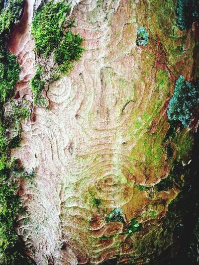 Growth Textured  Tree Nature No People Love Nature🌲 Tree Bark Patterns Tree Bark Unusual Beauty In Nature Our World Respect Nature Wood Forest Outdoors Mobilephotography Love Perspective Plants 🌱 Beauty In Everything Meditation Place