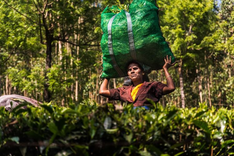 Low angle view of mid adult woman carrying sack on head in forest