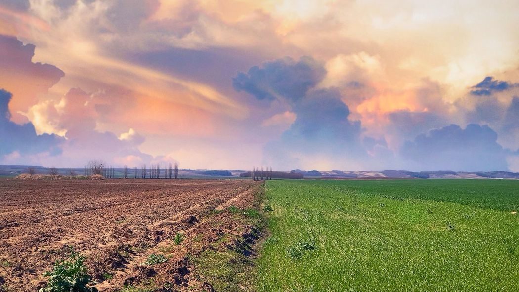 iPhone7Plus,BrainFeverMedia Cloud - Sky Sky Environment Landscape Beauty In Nature Field Scenics - Nature Land Sunset Plant No People Farm Nature Agriculture Crop  Idyllic Growth Tranquility Rural Scene Tranquil Scene