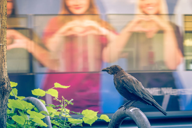 Close-up of bird perching on glass