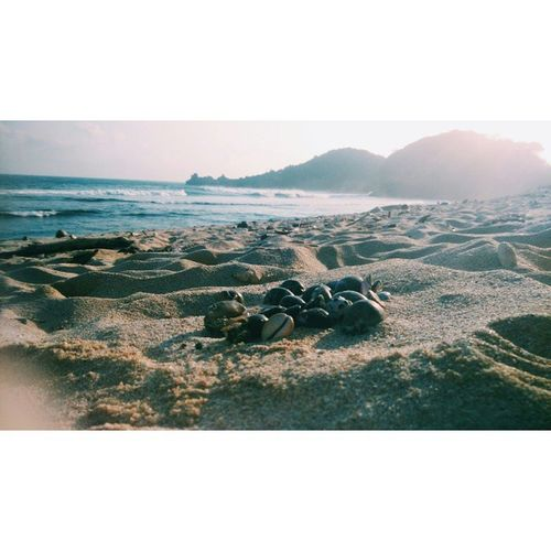 REU//NION Ecosystem  StillFresh  Shell Sandandstone Freshlyair Beachlover Pulaupenyu Nohumanschaos Nopolution
