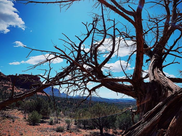 Summer in desert of Arizona Tree Plant Sky Low Angle View Branch Nature No People Sunlight Tranquility Outdoors Backgrounds Growth Blue Silhouette Day Beauty In Nature Clear Sky Forest Land Tranquil Scene