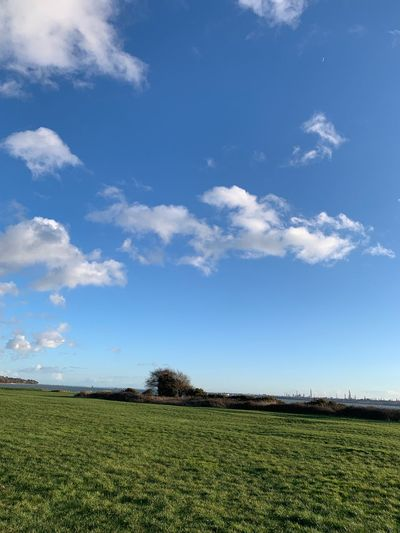 Blue Sky Blind Photographer Sky Cloud - Sky Field Tranquility Agriculture Tranquil Scene Land Landscape Beauty In Nature Rural Scene No People Green Color