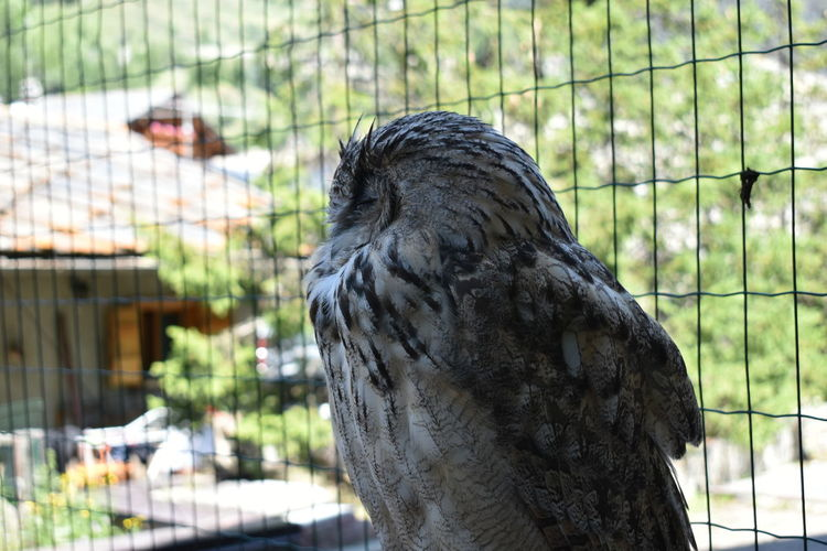 Close-up of eagle perching in cage at zoo