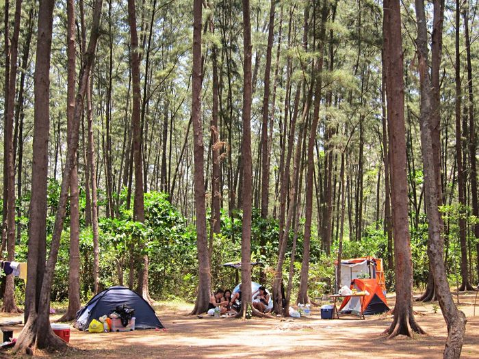 """""""All good things are wild and free."""" Forest Tree WoodLand Young Men Nature Camping Tree Trunk Outdoors Beauty In Nature Scenics Tranquil Scene EyeEm Nature Lover Eye Em Philippines Tropical Climate Vacations Beauty In Nature Travel Destinations AnawanginCove Nikon D3100"""