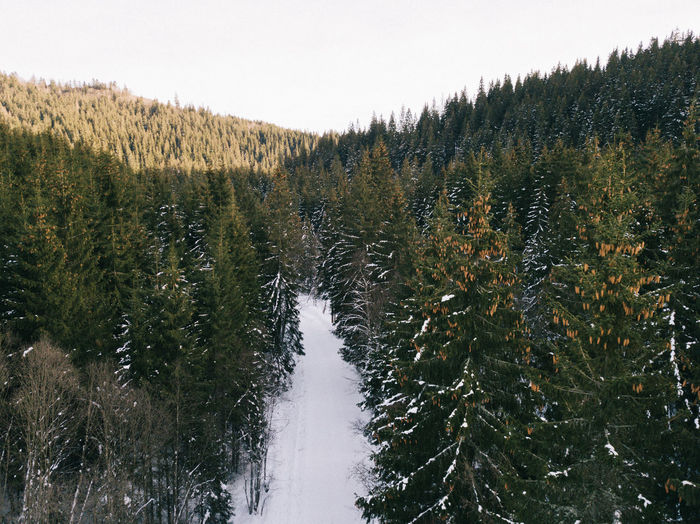 Beauty In Nature Clear Sky Cold Temperature Coniferous Tree Day Flowing Water Forest Green Color Growth Land Nature No People Non-urban Scene Outdoors Plant Scenics - Nature Sky Snow Tranquil Scene Tranquility Tree Winter