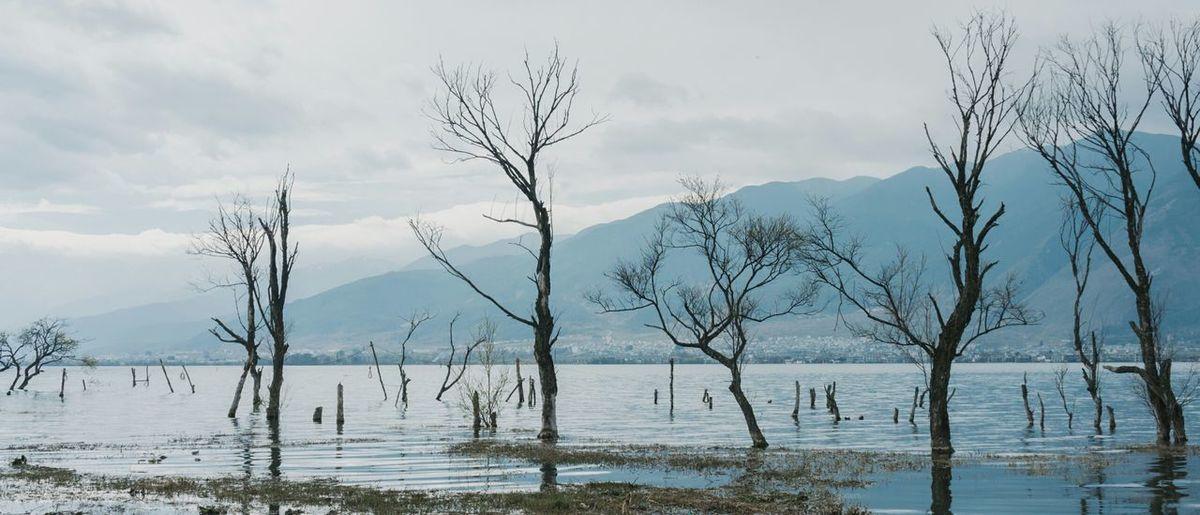 大理,湖边枯树。
