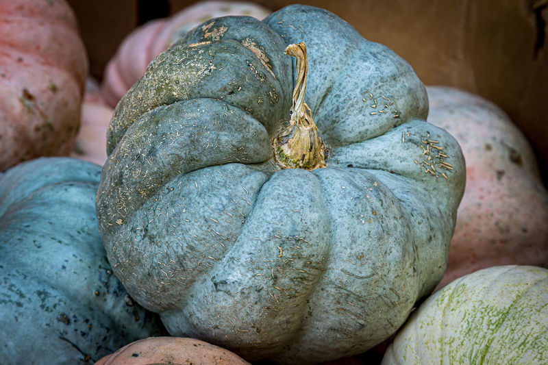 Close-up of pumpkin for sale in market