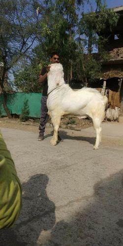 Full length of horse on tree