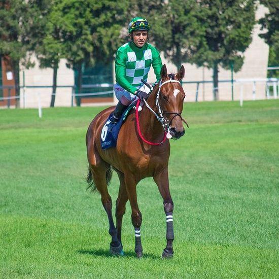 @volkany1 Seninki 🐎 Veliefendi Istanbul Horses Horse Horsesofinstagram Horseshoe Horses_of_instagram Horsestagram Instahorses Wild Mane Grass Field Nature Photooftheday Gallop Jockey Rider Riders Riding Run