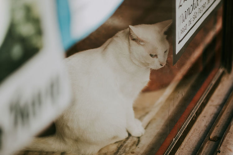 Pets Cat Mammal Indoors  Close-up Side View Sitting Animal Themes Looking Porto Portugal
