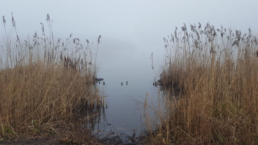 Alster Außenalster Germany🇩🇪 Hamburg Hamburg City January January 2018 Winter Winter Fog Außenalster Beauty In Nature Day Foggy Foggy Day Germany Lake Lake View Mystical Atmosphere Nature No People Outdoors Peaceful Peaceful And Quiet Silence Of Nature Water Tranquility Tranquil Scene Scenics Animal Themes Plant
