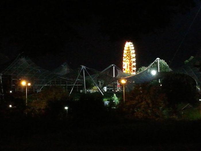 View of illuminated trees at night