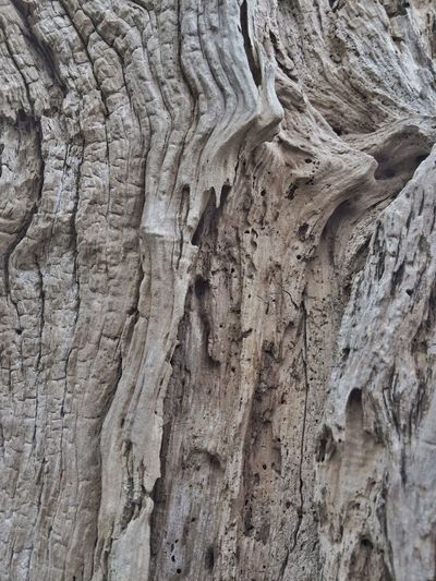 Textured  Abstractions In Nature Pattern Nature Rough Tree Trunk Close-up Backgrounds Outdoors Full Frame Physical Geography Beauty In Nature Oregon Coast Scenics Washed Up Tree Shapes In Nature  Wood Grain Abstract Nature Driftwood Layers And Textures Wood - Material