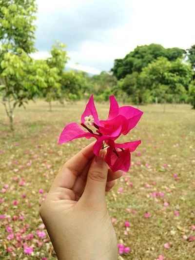 🌸 Human Hand Pink Color Flower Human Body Part Real People One Person Close-up Sky Petal Holding Beauty In Nature Focus On Foreground Nature Day Outdoors Fragility Flower Head Bougainvillea Freshness Maroon