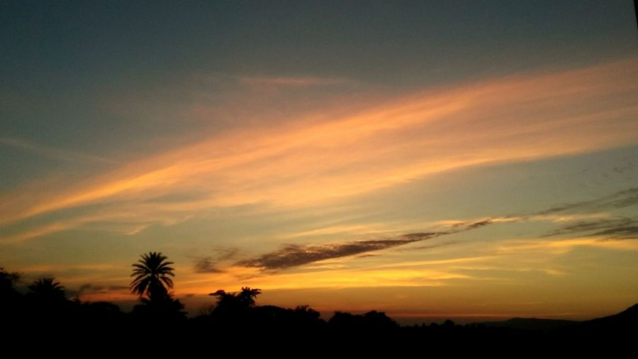 EyeEm Selects Tree Sunset Palm Tree Dramatic Sky Silhouette Scenics Beauty In Nature Travel Destinations Tree Area Day Sky No People Nature Multi Colored Tranquility Cloud - Sky Landscape Outdoors