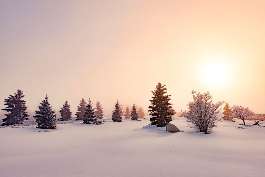 Winter sunrise Sunrise Winter Snow Cold Temperature Nature No People Landscape Tranquility Tree Tranquil Scene Beauty In Nature Day Sky Outdoors
