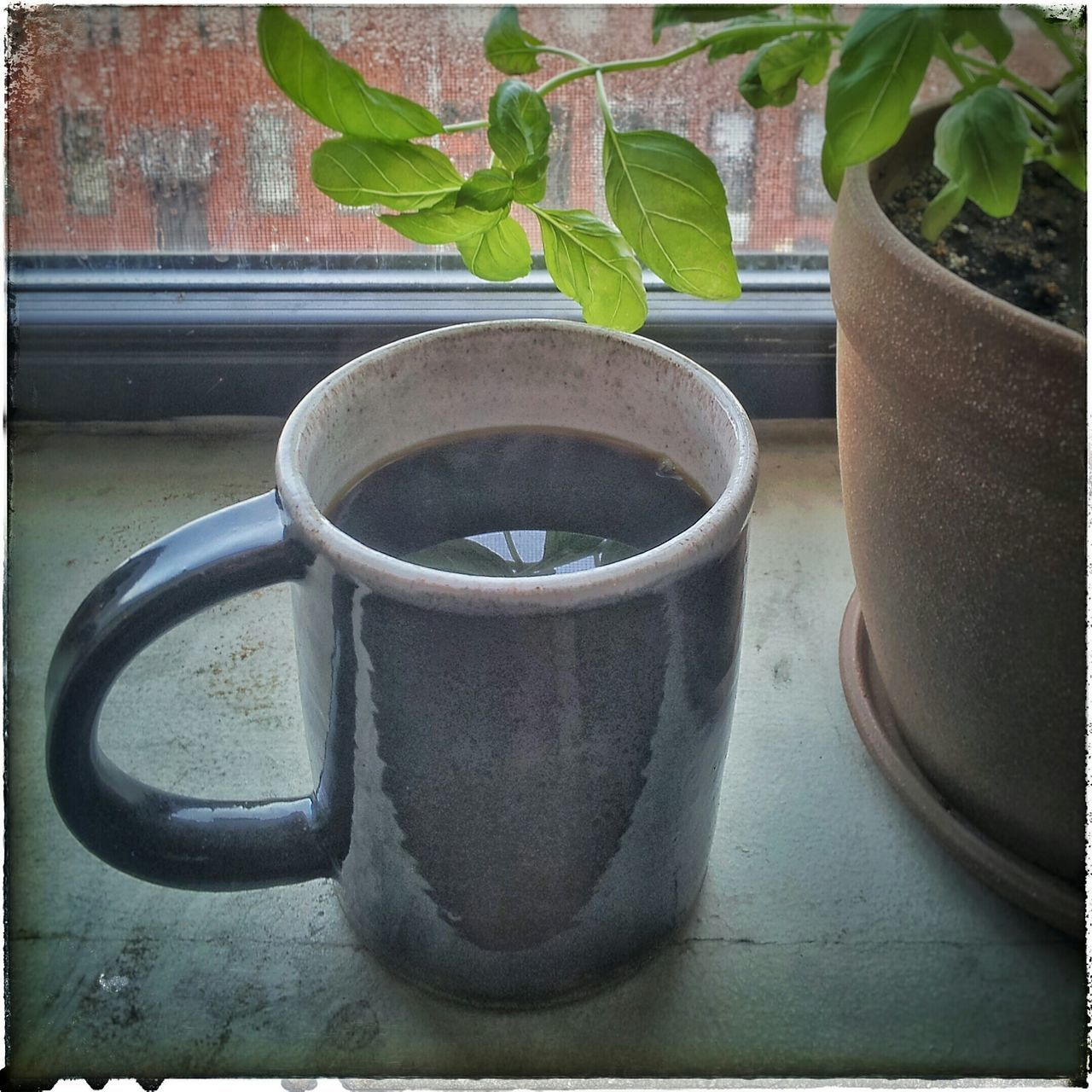 potted plant, plant, growth, leaf, no people, table, indoors, watering can, green color, day, nature, close-up, water, freshness