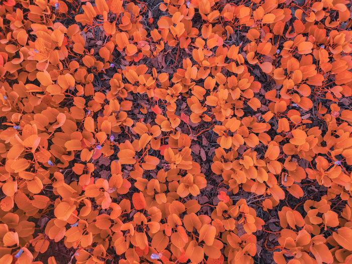 Full frame shot of orange flower