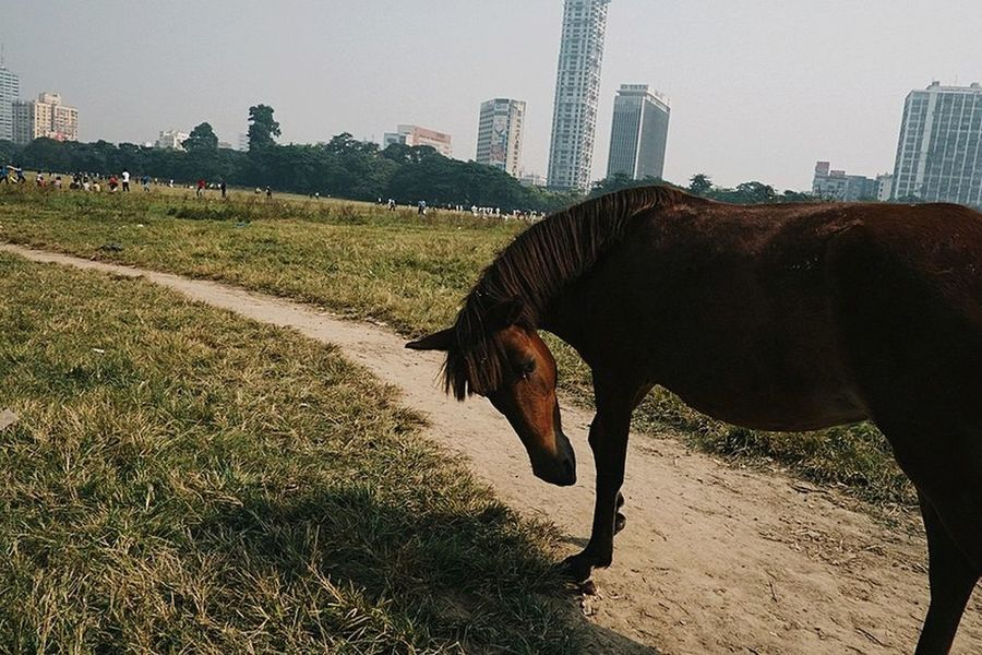 Streetphotography Yoonjeongvin Kolkata Skyscraper One Animal Domestic Animals Animal Mammal City Urban Skyline Animal Themes