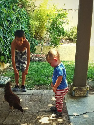Child Boys Curiosity Chickens Chickens Are Pets First Eyeem Photo EyeEmNewHere 100 Days Of Summer Pet Portraits