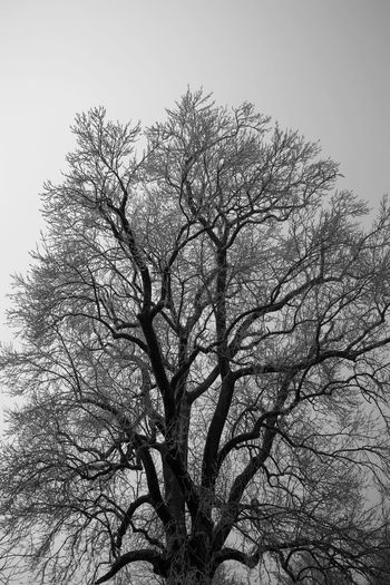 Tree Nature Beauty In Nature Landscape Winter Winter Is Coming Outdoors Tranquility Landscapes Nature Photography Nature_collection Beauty In Nature Landscape_Collection Blackandwhitephoto Treelife Landscape_photography Landscapes_captures Wintewintertime Tree_collection  Travel Photograpy Tranquil Scene