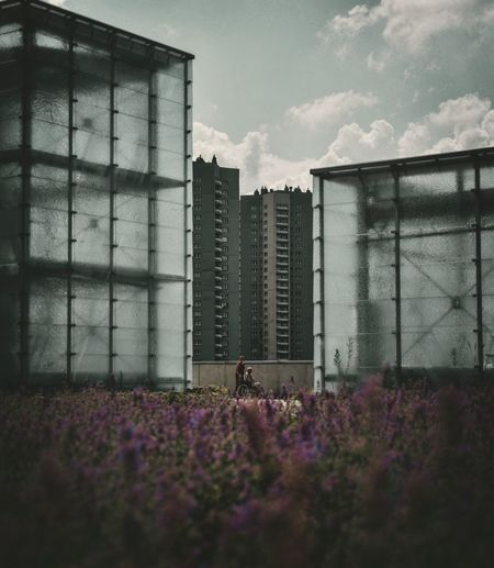 Architecture Flower Building Exterior Growth Built Structure Plant Outdoors Sky Day Nature City EyeEm Best Edits EyeEm Selects Streetphotography EyeEm Gallery The Week On Eyem Katowice Poland Summer City Your Ticket To Europe