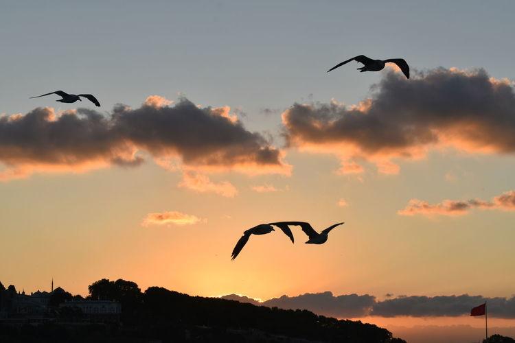 Silhouette of birds flying in sky