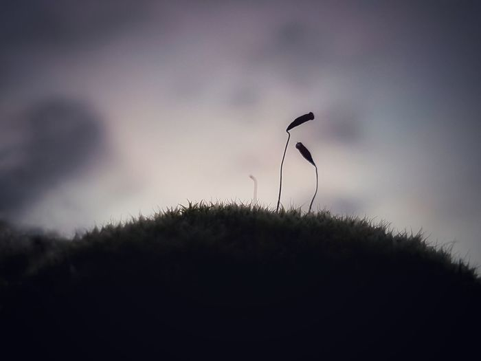 Close-up of silhouette plants on field against sky