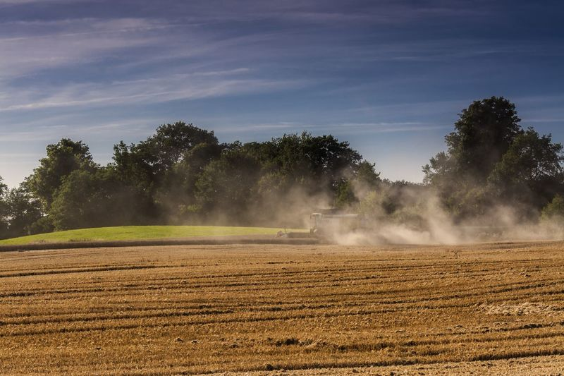 Harvest Agriculture Beauty In Nature Combine Harvester Day Farmland Farmlandscape Field Field Dust Growth Land Vehicle Landscape Nature No People Outdoors Rural Scene Scenics Schleswig-Holstein Sky Tree