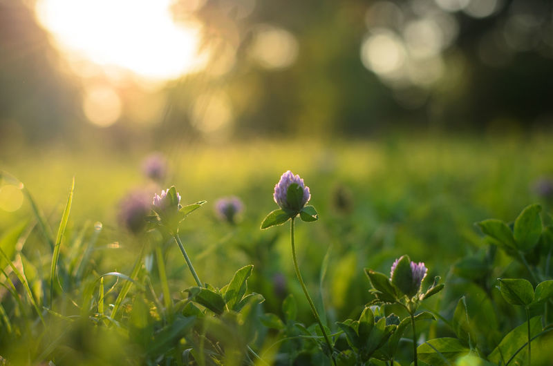 Beauty In Nature Bokeh Botany Flower Fragility Green Growing Nature No People Outdoors Park Petal Plant Selective Focus