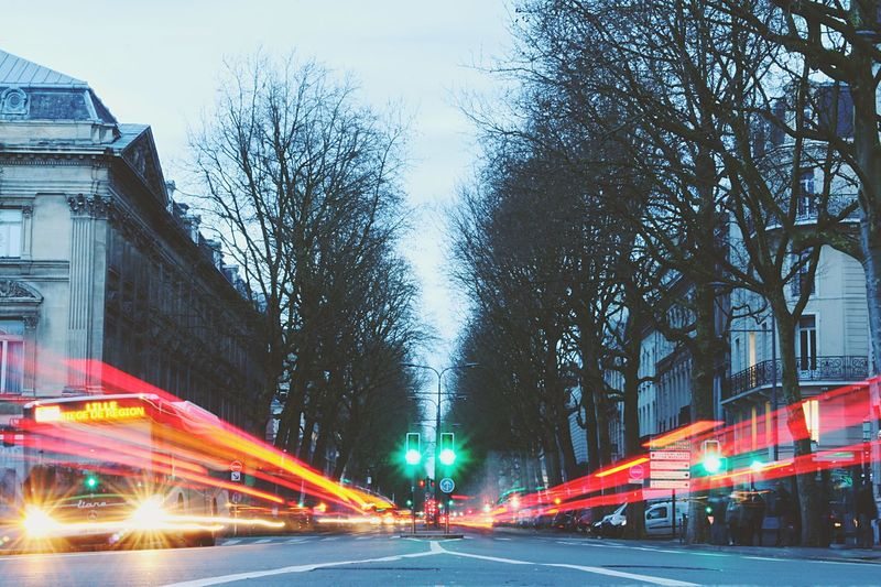 Light trails on street amidst bare trees in city