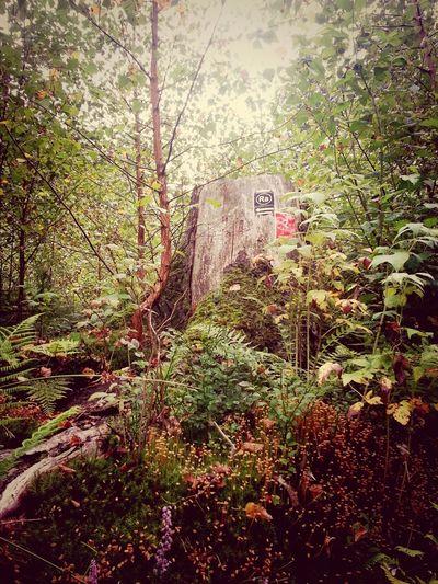 Baumstumpf mit Wegweiser ... Nature One