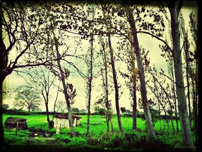 Balikesir,yesil,doga, First Eyeem Photo
