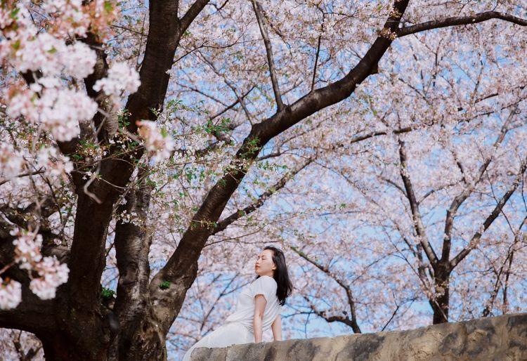 Layback Relaxing Sakura Sakura Blossom Pink Kyoto