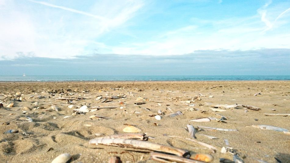 Beach Sky Sand Horizon Over Water Sea No People Cloud - Sky Tranquility Nature Winterbeach Shells Sands PhonePhotography Deauvillebeach Minimalism Deauville France