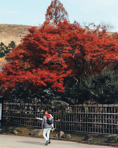 Theme red Tree Plant One Person Real People Leisure Activity Autumn Nature Lifestyles Full Length Change Day Casual Clothing Rear View Growth Railing Sky Men Women Outdoors Warm Clothing It's About The Journey