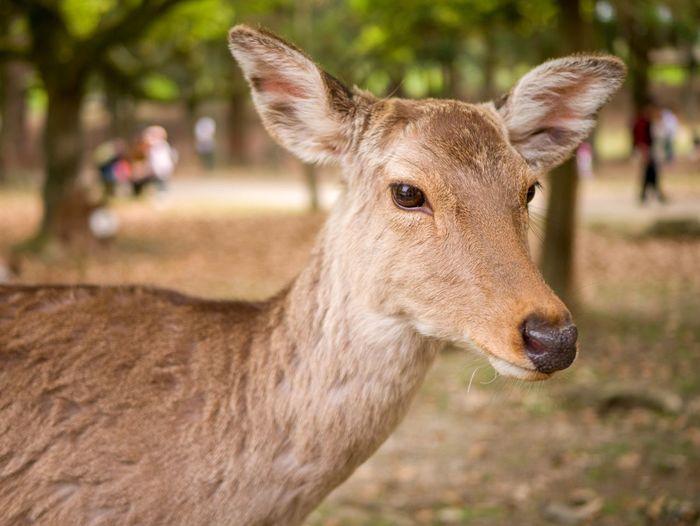 Close-up of deer looking away